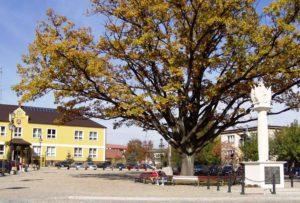 Rynek Łapanów jesienią